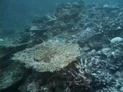 Case of the Sponge Bob 147
