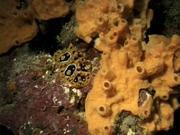 Case of the Sponge Bob 024