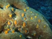 Case of the Sponge Bob 034