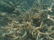 Case of the Sponge Bob 154
