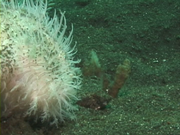 Case of the Sponge Bob 126