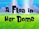 A Flea in Her Dome title card
