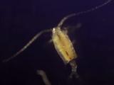 Мама Планктон