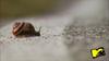 SB MTV Snail 1