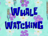 Whale Watching/transcript