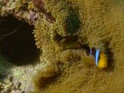 Case of the Sponge Bob 145