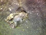Case of the Sponge Bob 037