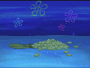 Moldy Sponge 006