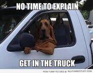 Bloodhound meme