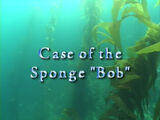 "Case of the Sponge ""Bob"""