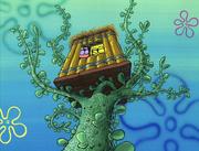 Club SpongeBob 009