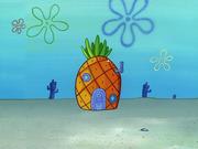Home Sweet Pineapple 070