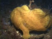 Case of the Sponge Bob 137