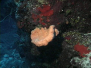 Case of the Sponge Bob 029