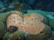 Case of the Sponge Bob 036