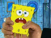 Model Sponge 161