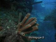 Case of the Sponge Bob 022