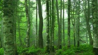 """Beautiful Relaxing Music """"Deep in the Forest"""" by Peder B"""