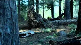 Geico Tree Falling