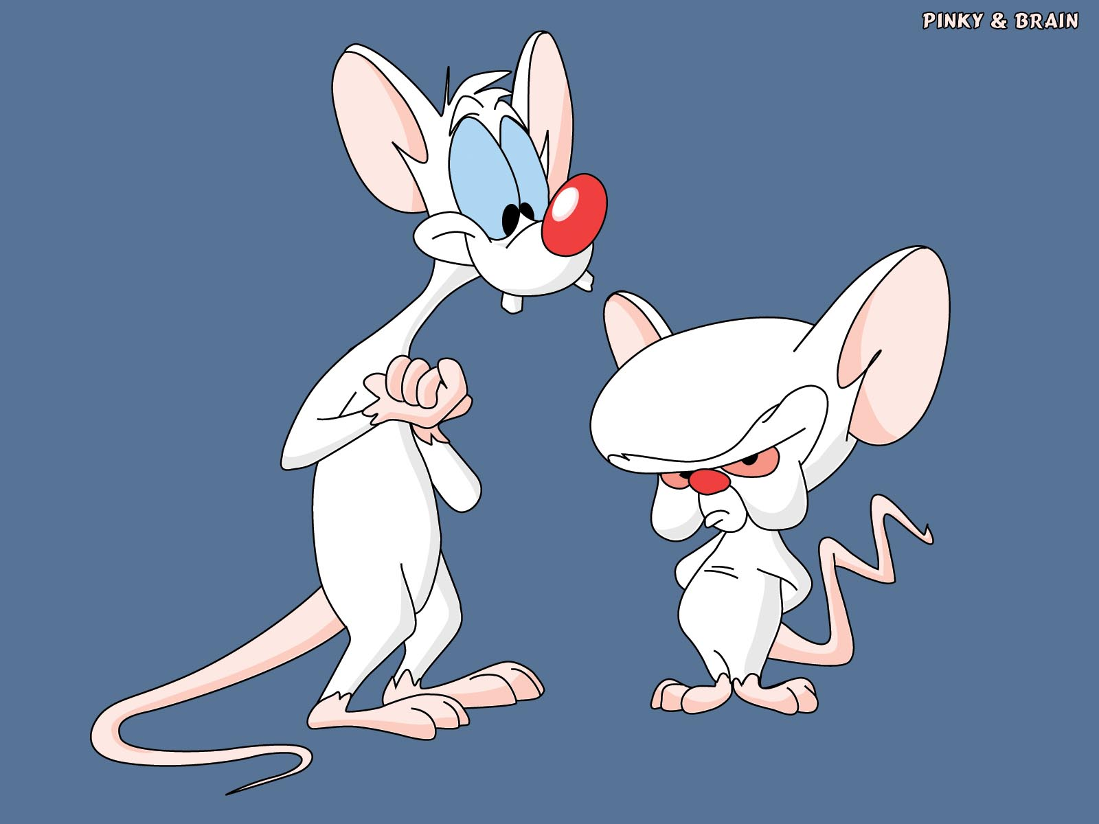 Pinky and the brain spongebob friends adventures wiki fandom pinky and the brain thecheapjerseys Images