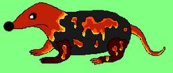 Lava Shrew