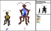 Vcrintexen Species
