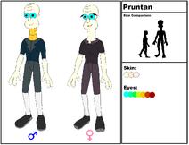 Pruntan Species