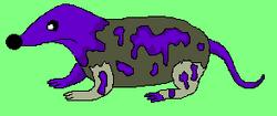 Purple Shrew