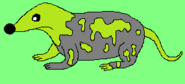 Acid Shrew