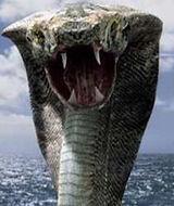 Kvc cobra