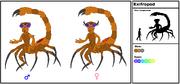 Exifropod Species