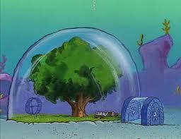 Sandy's Boomkoepel