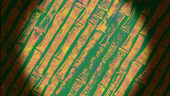 Yeti Krabs Background