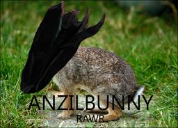 Anzilbunny