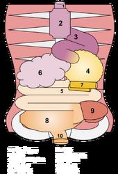 Pnolthane Digestive (1)