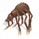 Spiderbaba