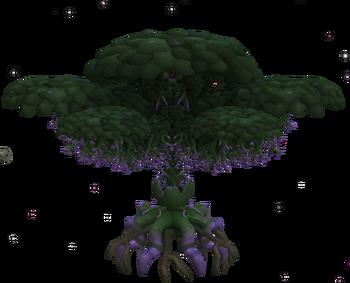 QuadrantiaDeciduous tree