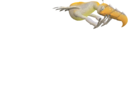 CRE Raptorel-18e6d700 ful