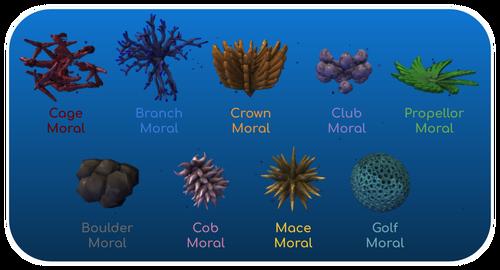 Archimoral types (1)