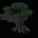 Quadrantia Deciduous tree