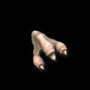 Вилкопал обыкновенный