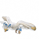 Fornaeria Seagul