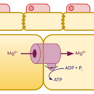 Faradae Structure