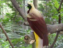 Big ave-del-paraiso