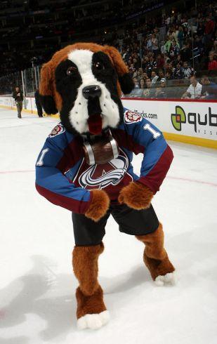buy popular e6175 e357b colorado avalanche dog jersey
