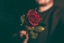 Rohn How-to-Make-Magic-With-a-Rose-and-a-Milkshake