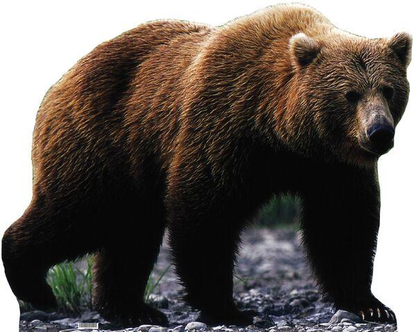 File:675-Bear.jpg