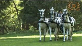 Lipizzaner horses in Szilvásvárad - Lipicai ménes Szilvásvárad