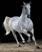 Horse 000008038936