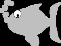 Fish-no-photo